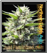 Automatic Northern Lights Blueberry cannabis single seeds
